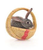 Little rabbit in a basket — Stock Photo