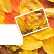 Blank cards with fall leaves — Stock Photo