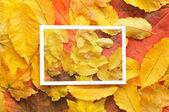 кадр из осенних листьев — Стоковое фото