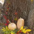 Stock Photo: Autumn still life with pumpkin.