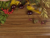 Background with sorbus — Stock Photo