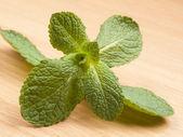 Fresh mint — Stock Photo