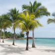 Caribbean beach and coconut palms — Stock Photo