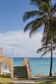 Belle plage avec palmiers et escalier — Photo