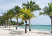 Caribbean beach and coconut palms — Stock Photo