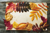 Autumn leaves and old paper — Stock Photo