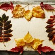 Autumn frame — Stock Photo