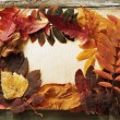 Autumn frame — Stock Photo #4232341