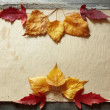 Autumn frame — Stock Photo #4232343