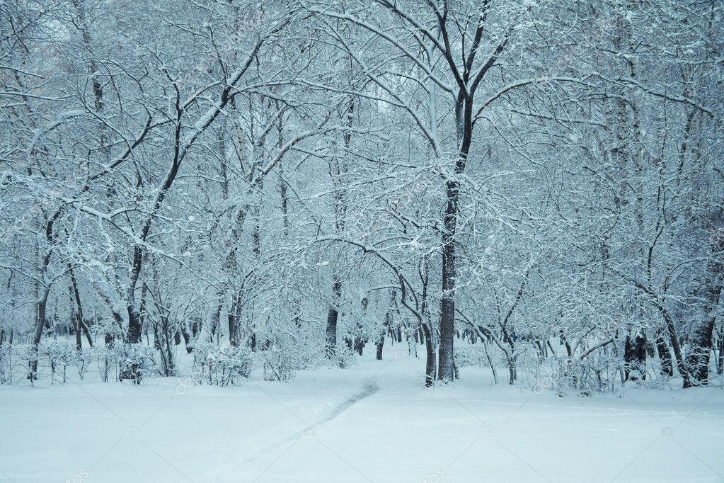 Locais de Pellon Depositphotos_4760744-stock-photo-frozen-woods