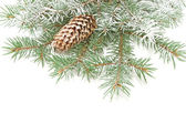 Branches of a Christmas fur-tree — Stock Photo