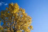 Autumn tree in a park — Stock Photo