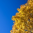 Stock Photo: Bright colors of autumn