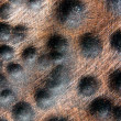 Copper Dot Bumps - Stock Photo