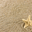 Stock Photo: Sand and starfish
