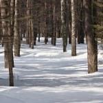 Winter landscape — Stock Photo #4248719