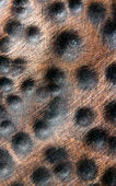Copper Dot Bumps — Foto Stock