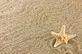 Sand and starfish — Stock Photo