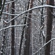 Icy Trees — Stock Photo