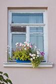 Flower box and window — Stock Photo