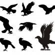 Eagle silhouettes - Stock Vector