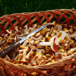 Basket with mushrooms on a green grass — Stock Photo