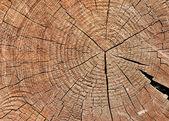 Verweerde houten knippen — Stockfoto