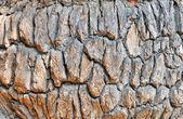 Gamla ek bark — Stockfoto