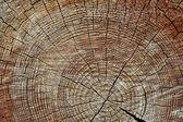 Zvětralých dřevěných řezaných — Stock fotografie