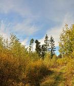 Percorso attraverso la foresta d'autunno — Foto Stock