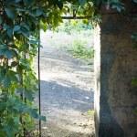 Old door in garden — Stock Photo #4941632