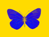 Mariposa alienígena — Foto de Stock