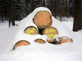Woodpile — Stock Photo
