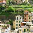 Italy. Cinque Terre. Colorful houses of Riomaggiore village — Stock Photo