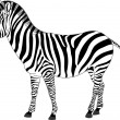 Illustration of zebra - Stock Vector