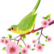 Spring bird — Stock Vector #5275700
