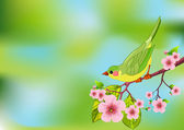 Spring bird background — Stock Vector