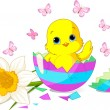 Easter chick surprise - Stock Vector