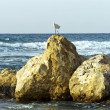 Stone coast Mediterranean sea — Stock Photo