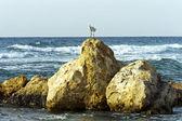 Stone coast Mediterranean sea — Stock Photo