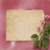 Grunge alienated paper for congratulation with painting rose — Stock Photo