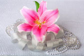 Beautiful pink lily flower on the silver textile background — Stock Photo