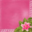 Beautiful pink lily flower on the abstract background with lace — Stock Photo