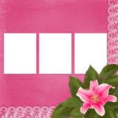 Fleur de lis rose belle sur l'abstrait avec dentelle — Photo