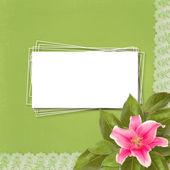 Piękne różowe lilia kwiat na streszczenie tło z koronki — Zdjęcie stockowe