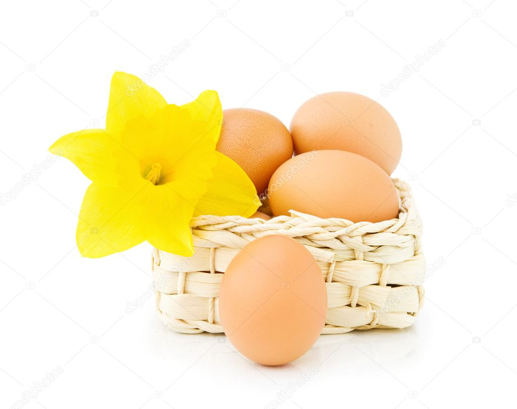 Celebrating Easter with fresh eggs and spring daffodil. Isolated over white background. — Stock Photo #5208975