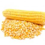 Corn — Stock Photo