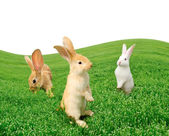 Cute Rabbits in the Field — Stock Photo