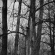 Creepy Dark Forest — Stock Photo