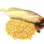 Pile of Corn and Corncob — Stock Photo